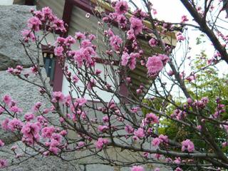 桃山城ブログ6