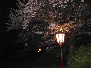 夜桜ブログ2