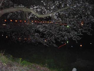 夜桜ブログ4