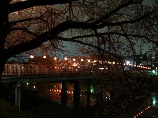 夜桜ブログ5