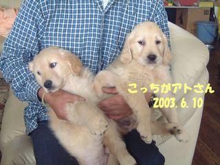 200306102頭ブログ