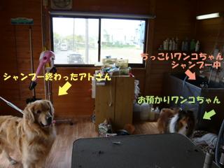 シャンプーの部屋ブログ
