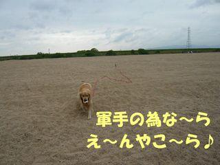 軍手ボールブログ2