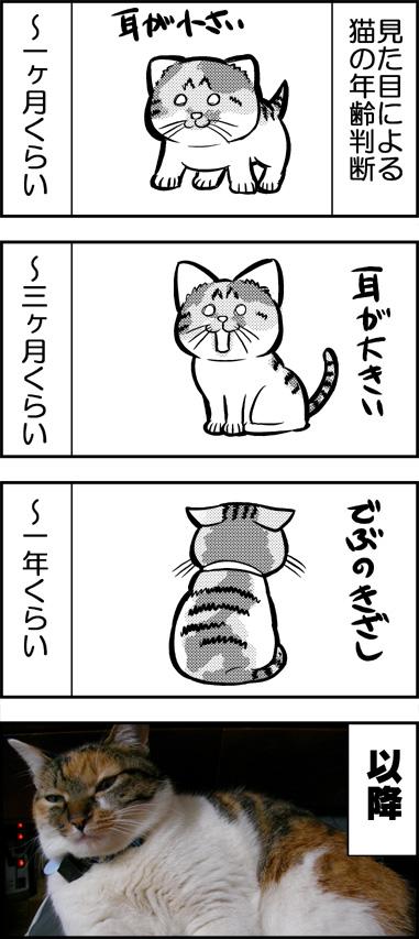 ネコの年齢判断