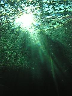 海の底から