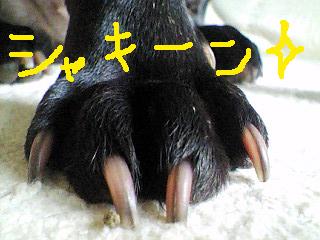 爪のびのび