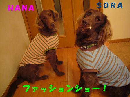 20070308134306.jpg