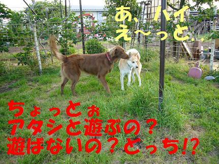 20070520231944.jpg