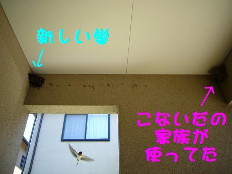 20070805010900.jpg