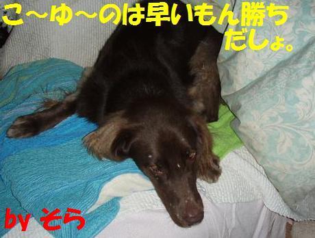20071104113955.jpg