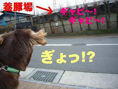 r_03JAN0720137.jpg