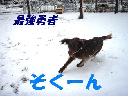 saikyouyusha.jpg