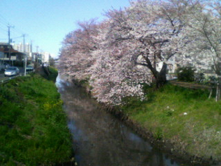 桜全景30日1