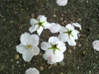 花ごとポトリ!