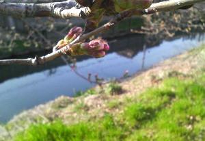 春はもうすぐそこだねぇ~
