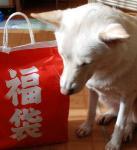 081002fukubukuro.jpg