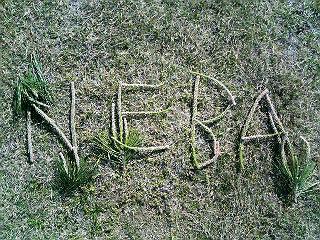 NEBA隊、ここに刻む