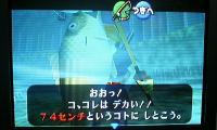 fish74.jpg