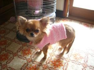 きなこセーター