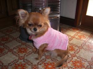 きなこセーター2