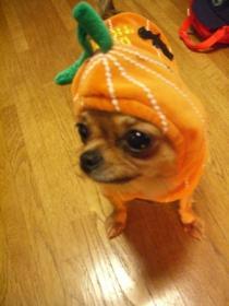 かぼちゃきな