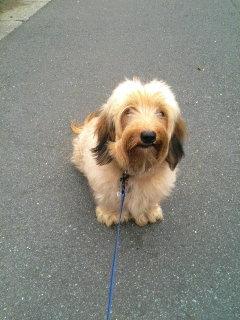 愛犬のリブ