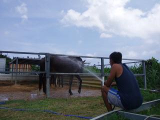 馬シャワー