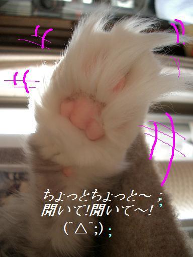 猫の手。文字
