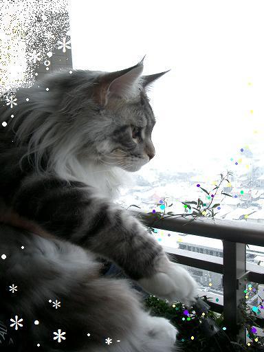 雪だね....