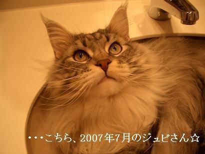 2007.6.。。1のじゅぴさん