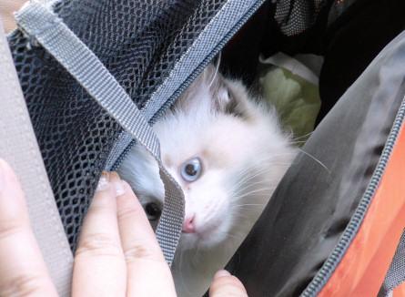どこ行くのにゃ