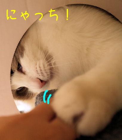 にゃっち!