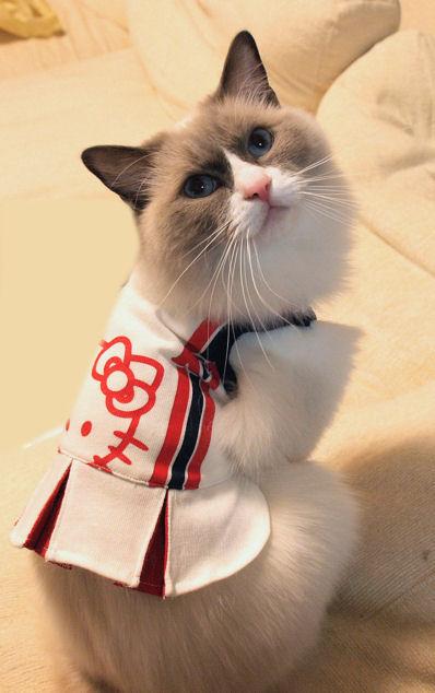 キティを着てやったにゃ!