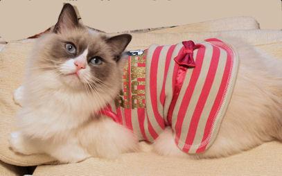 チシャ猫っぽい?