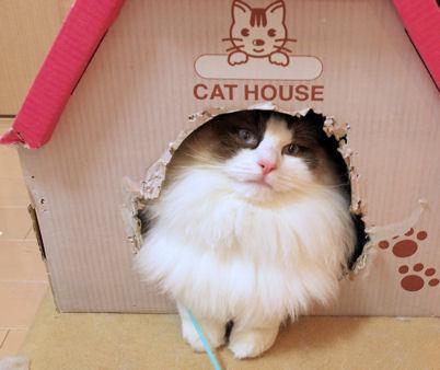 お気に入りの家。