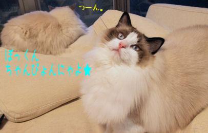 チャンピオン猫とそれをウザがる猫
