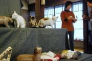 ニャンとも楽しい動物展in所沢