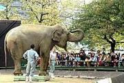 神戸市灘区の市立王子動物園で