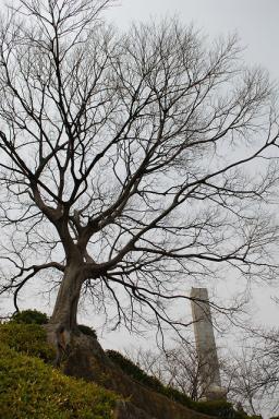 大樹と慰霊塔
