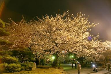夜桜(*istDSの場合)