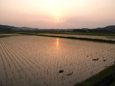 たんぼの夕陽