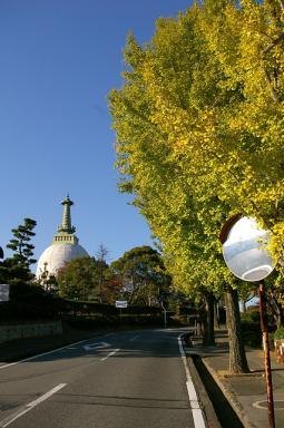 名古山の銀杏