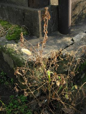 枯れ草と朽ちたコンクリートと錆と苔