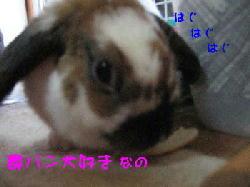 20070509210644.jpg
