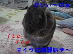 20070602091449.jpg