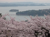 西行戻しの松 4月21日