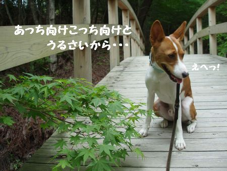 東のほうから豆台風が上陸しました。