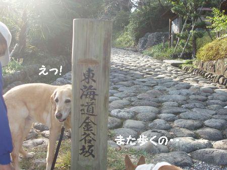 熊野古道よりも歩きやすいです。