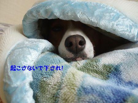 私も眠いです。