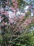 紅梅も咲いていました!!